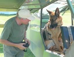 belgian sheepdog massachusetts german shepherd dog u2013 learning from dogs