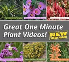 Garden Express Summer Catalogue - plants express