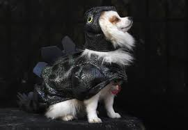 halloween event dragon city 41 hilarious pictures of howl o ween dogs today com