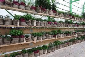 lyn atelier herb garden