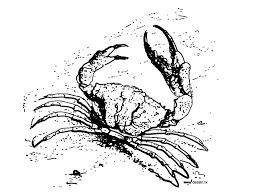 coloring crab