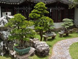 bonsai garden display stands suitable with bonsai garden diy