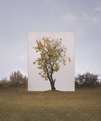 photographs of outdoor trees framed by white canvases