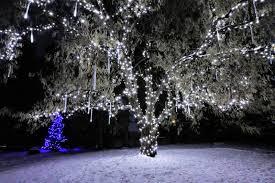 Yukon Lights Festival Winter Lights Festival At Nikka Yuko Japanese Gardens Lethbridge