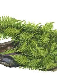 tropica 1 2 grow tissue culture plants
