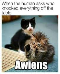 Cat Alien Meme - grrrawwww cut n v rl 鉷d pinterest cat animal and funny