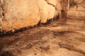 kill mold an expert u0027s advice on becoming mold free the simple way