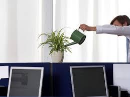 good office desk plants cool gilded planter more gold deskoffice