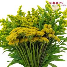 filler flowers wholesale yellow filler flowers bulk pack blooms by the box