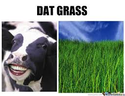 Grass Memes - dat grass by recyclebin meme center