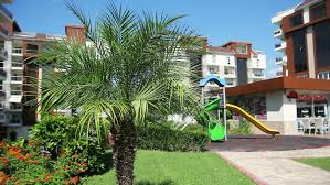 outdoor courtyard courtyard with palm trees and children s playground baby boy