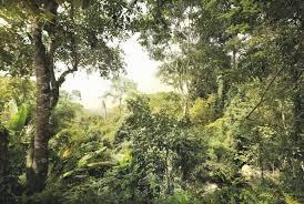 wallpops komar wilderness 145 x 98 komar wilderness 145 x 98