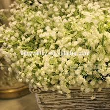 bulk baby s breath gypsophila babys breath bulk flower seeds for growing buy babys