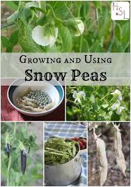 What To Plant In Spring Vegetable Garden by 495 Best Growing Your Own Vegetables Images On Pinterest Garden