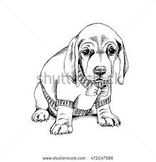 portrait puppy beagle pullover bow vector stock vector 472247566