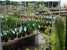 native plant nursery sydney cool counrty native nursery canberra gardening with angus