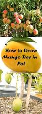 Types Of Vegetables To Grow In A Garden - how to grow mango tree in pot