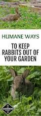 4 ways to keep rabbits from ruining your garden rabbit eating