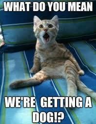 Funny Animal Meme Pictures - cats rule dogs drool meme meme rewards