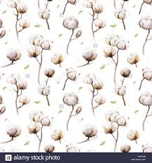 cotton flowers watercolor vintage background with twigs and cotton flowers boho
