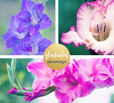 gladiolus flowers gladiolus meaning and symbolism ftd