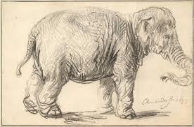 file rembrandt harmenszoon van rijn an elephant 1637 google