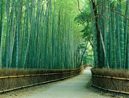 sagano bamboo forest wallpapers sagano bamboo forest hd wallpapers