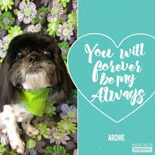 affenpinscher reviews canine chateau home facebook