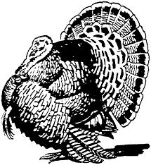 turkey black and white wild turkey black and white clipart