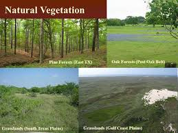 Texas vegetaion images The four regions of texas ppt video online download jpg