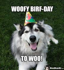 Funny Animal Birthday Memes - 268 best funny animal birthday memes images on pinterest birthday