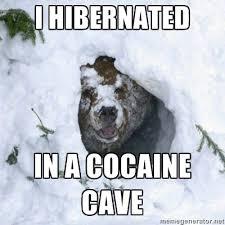 Coke Bear Meme - image 272329 cocaine bear know your meme