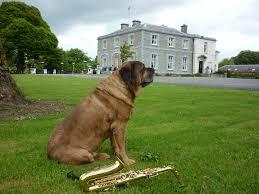 house dogs pet friendly holidays in ireland julianne mooney