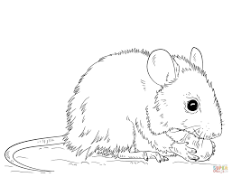 mouse coloring free printable coloring pages