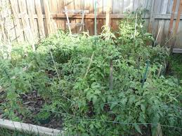 Gardening For Beginners Vegetables by Best Ideas Vegetable Gardening In Florida For Beginners Home