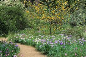 san francisco native plants san francisco botanical garden u0027s spring wildflower explosion