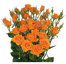 wholesale roses wholesale orange spray flowers for sale