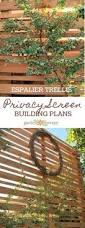 best 25 privacy trellis ideas on pinterest privacy plants
