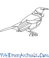 how to draw a tui