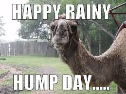 Rainy Day Meme - rainy hump day memes memes pics 2018