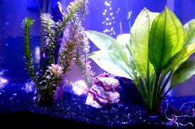 new terrarium diy smart planted fish tanks the clever life