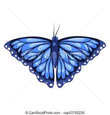 blue monarch butterfly isolated on white background vectors