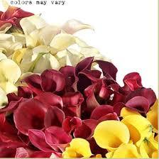 calla colors calla assorted colours calla flowers and fillers