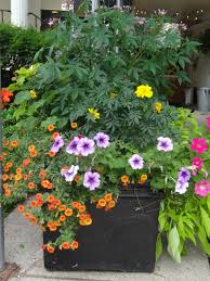 Winter Container Garden Ideas Catchy Summer Container Container Garden A Touch Along With