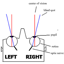 Blind In One Eye Depth Perception What Can Be Seen Through One Eye But Not The Other Quora