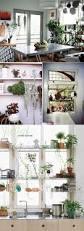 living trend houseplants for kitchen u0026 dining room dine