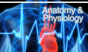 Anatomy And Physiology Human Body Anatomy And Physiology Of Human Body U2013 U201clife Is Like Riding A