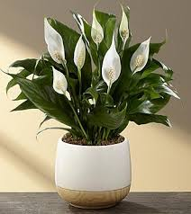 5 answers what are the best indoor plants to grow in india