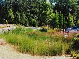 plant communities environmental nature center lose u0026 associates gwinnett environmental u0026 heritage center
