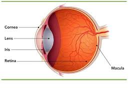 Does Macular Degeneration Always Lead To Blindness 5 Tips How To Manage Age Related Macular Degeneration Zestnow